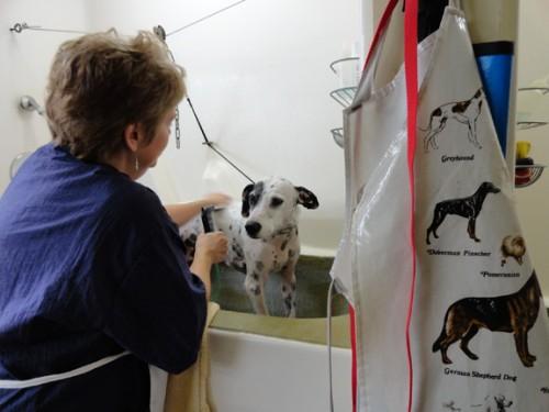 Dog Grooming Charlottesville