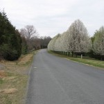 Earlysville Spring