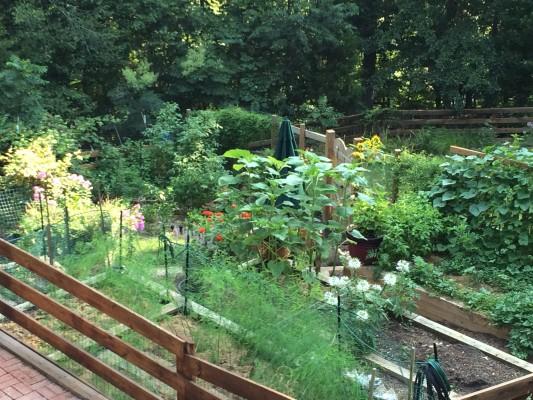 Gardening in central virginia preparing the vegetable - Prepare vegetable garden for winter ...