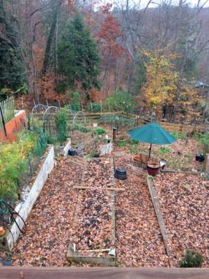 Charlottesville Vegetable Gardening